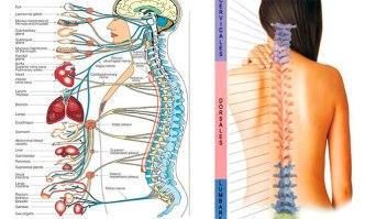 columnavertebralquiropractico