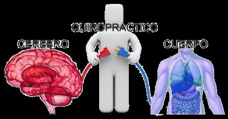 el-puente-entre-el-cerebro-y-el-cuerpo-quiropractica-blog